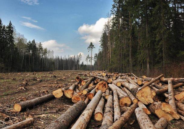 39 гектаров городских лесов предполагает новый план в Курске